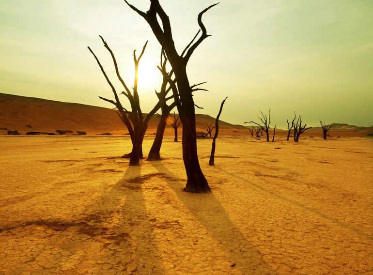 Dry_trees_in_Namib_desert