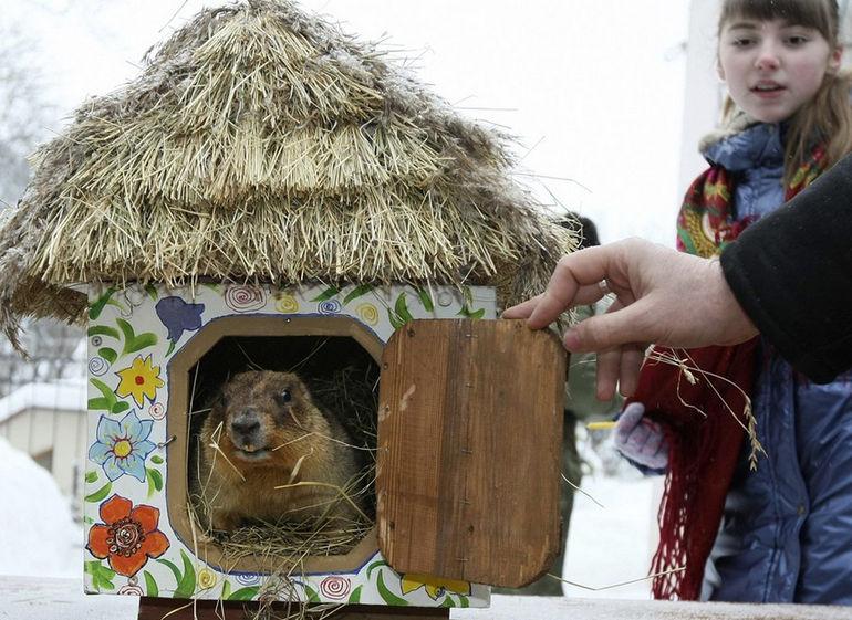 Ukraine-Groundhog-Day_Stew2