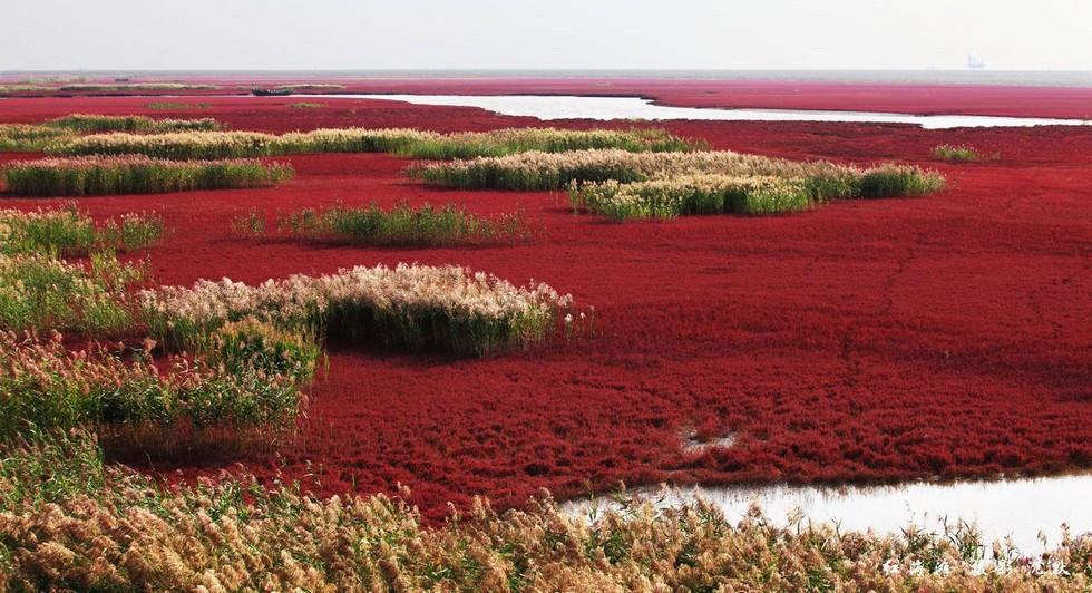 panjin-red-beach (14)