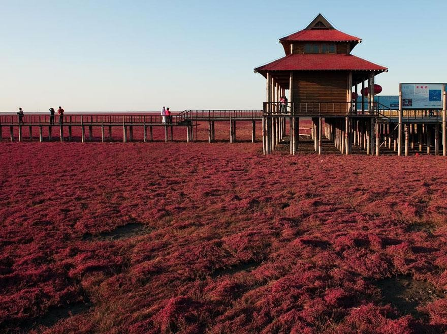 panjin-red-beach-china-5