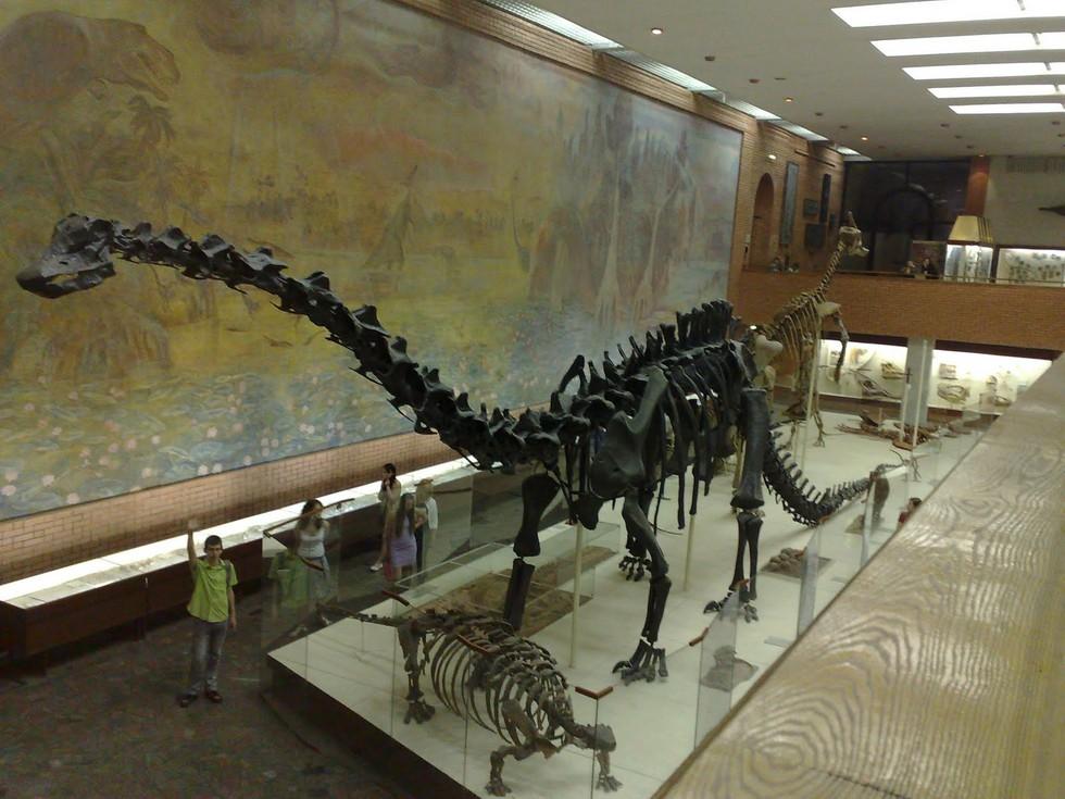 Палеонтологический-музей