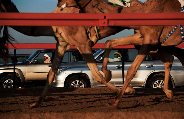 camel-race-dubai-1