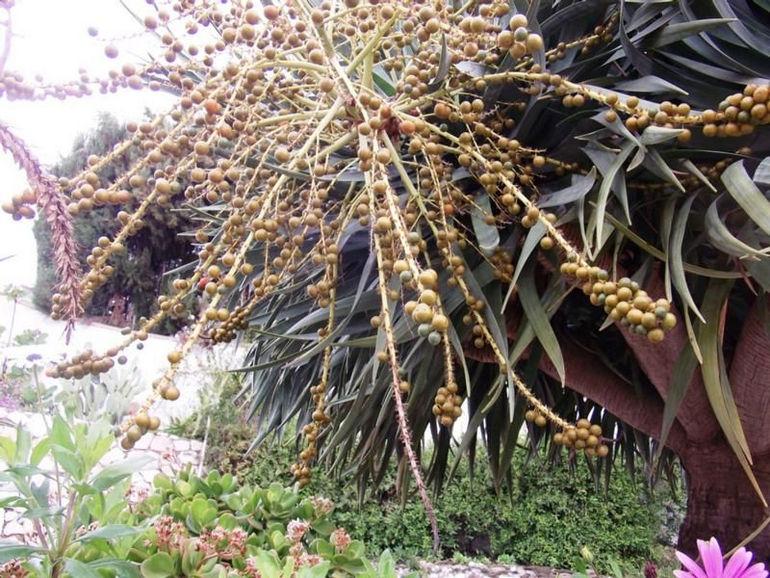 3111918_com_draco_berries_on_tree_