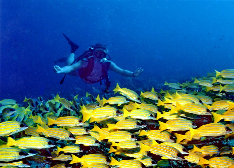 Banana_Reef