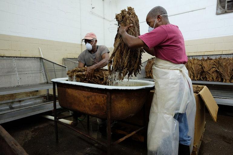 Handmade_cigar_production._Manufacture_worker._Tabacalera_de_Garcia_Factory._Casa_de_Campo,_La_Romana,_Dominican_Republic_(2)w