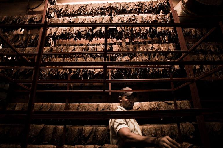 Handmade_cigar_production._Manufacture_worker._Tabacalera_de_Garcia_Factory._Casa_de_Campo,_La_Romana,_Dominican_Republic_(3)