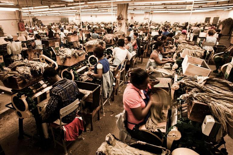 Handmade_cigar_production,_process._Shopfloor_of_Tabacalera_de_Garcia_Factory._Casa_de_Campo,_La_Romana,_Dominican_Republic