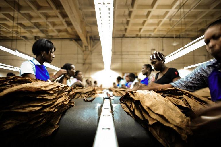 Handmade_cigar_production,_process._Tabacalera_de_Garcia_Factory._Casa_de_Campo,_La_Romana,_Dominican_Republic_(1)