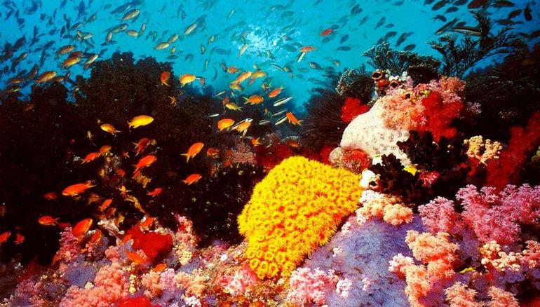 Postcard_Great_Barrier_Reef_1739