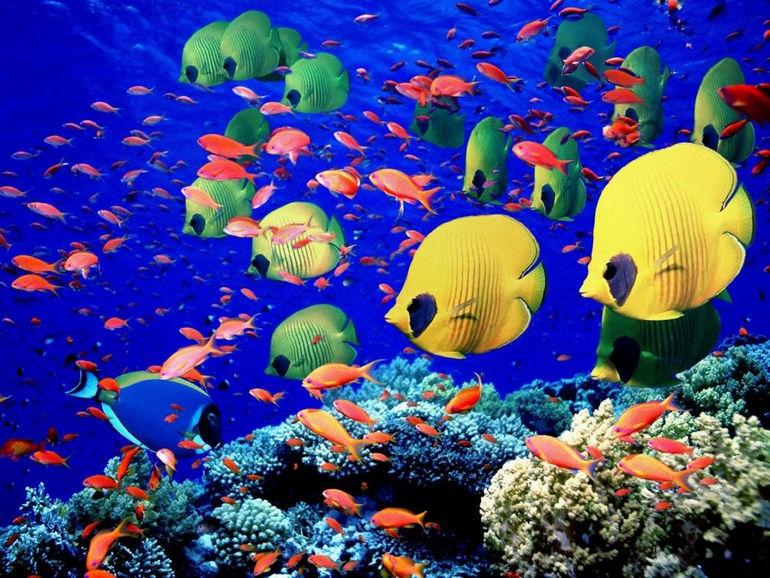 maldives_marine_life