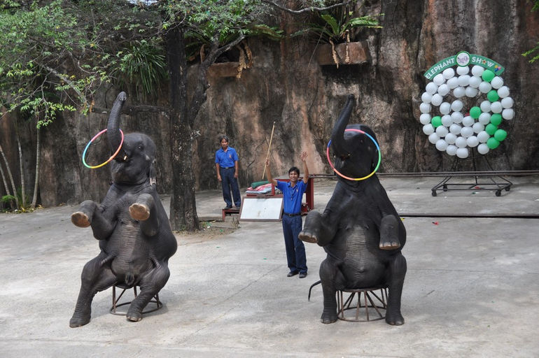 sriracha-tiger-zoo-22-01-2010-374