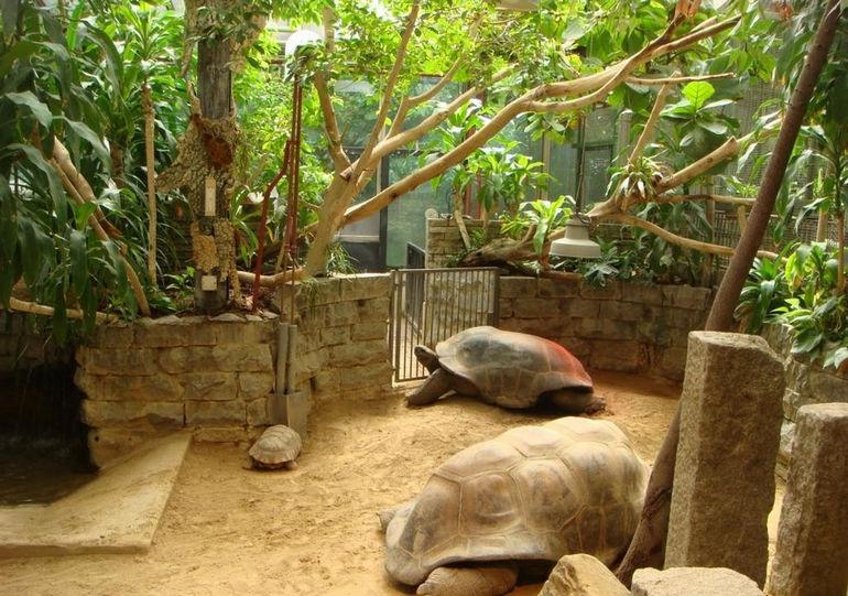 Зоопарк Natura Artis Magistra в Амстердаме (Нидерланды)