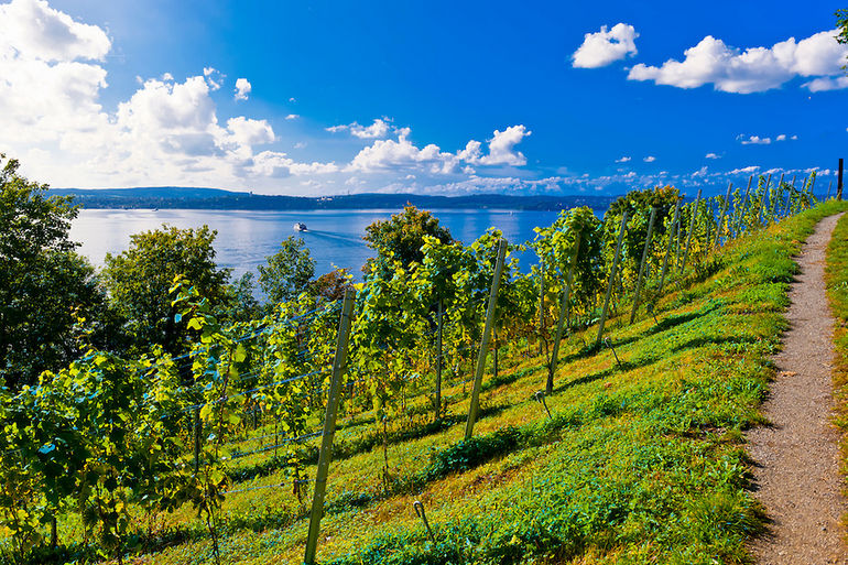 Vineyards, the medieval city of Meersburg on Lake Constance (Bodensee), Baden-WŸrttemberg, Germany
