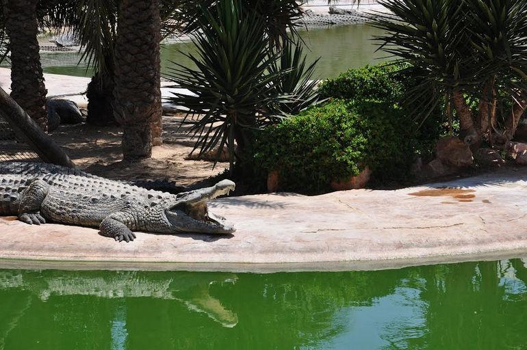 Заповедник крокодилов на острове Джерба