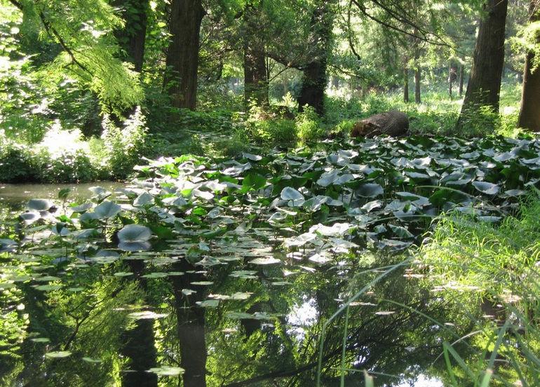 Бухарестский ботанический сад