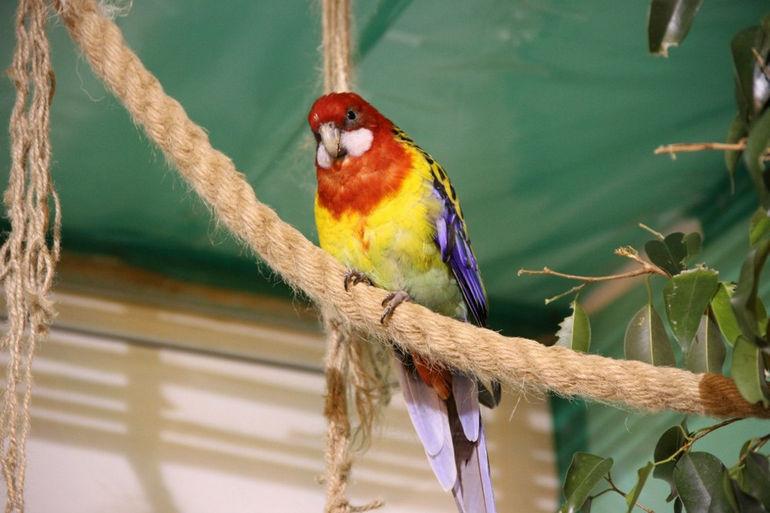 Сад Райских птиц «Миндо» в Петербурге