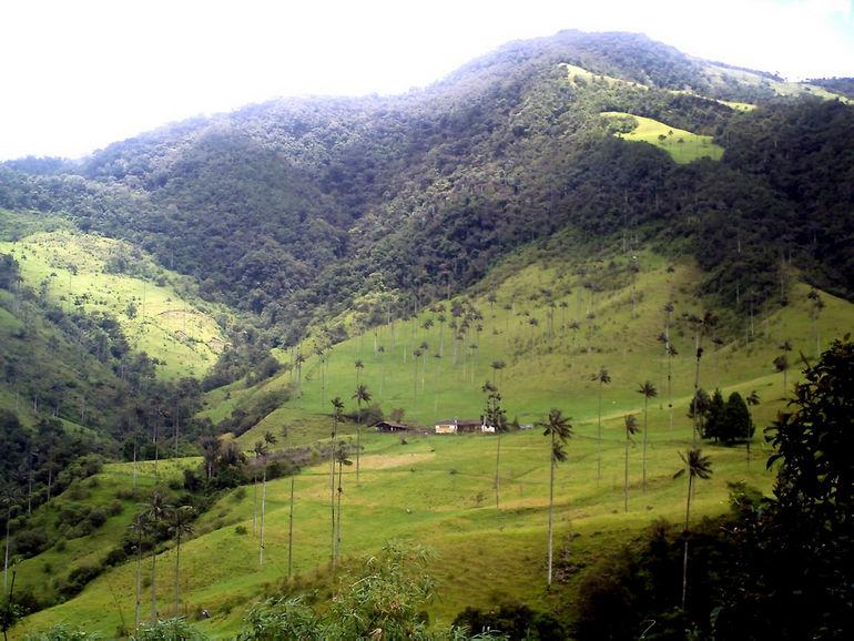 Cocora_valley