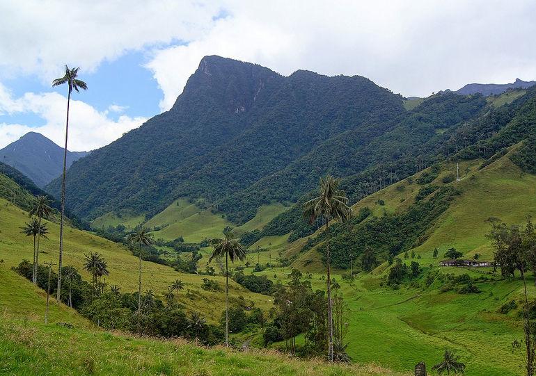Valle-del-Cocora-Mountain