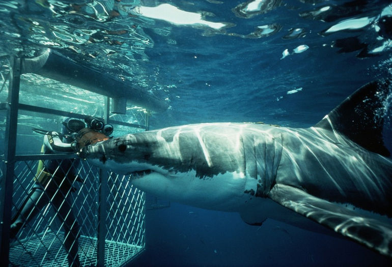 cage-with-shark