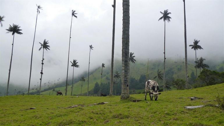 cocora_valley_colombia_20120522_105