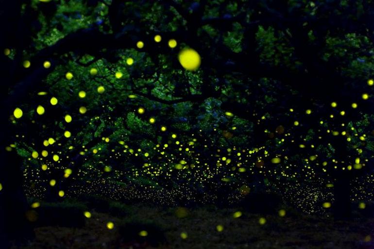 firefly-012