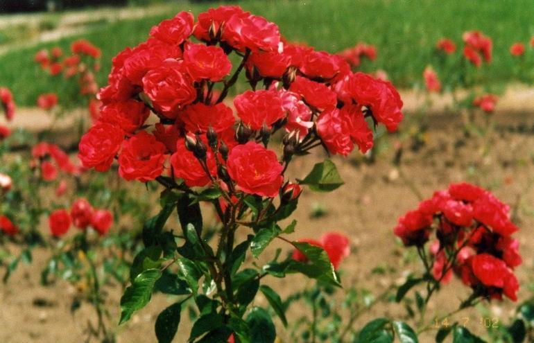 kislovodsk-dolina-roz