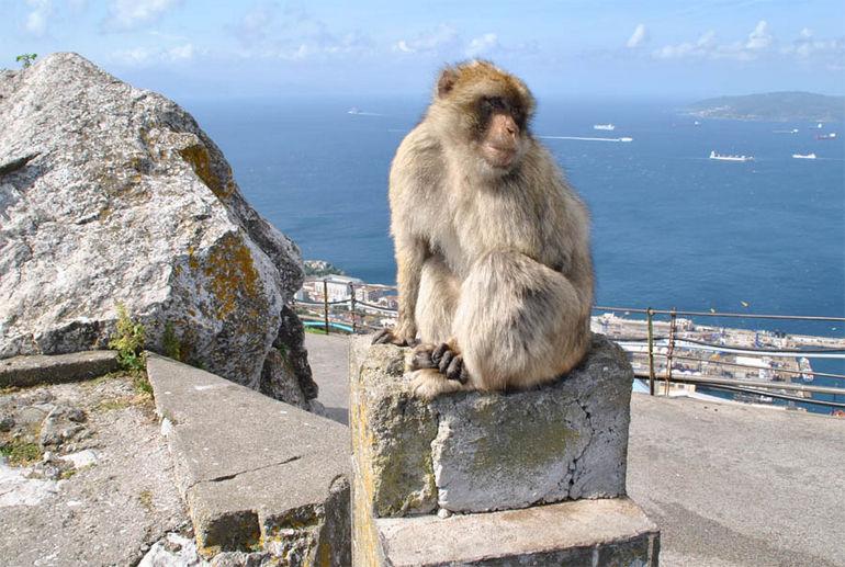 Rock_of_Gibraltar_2013_05