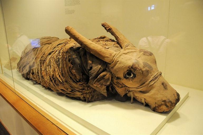 p-1024x1024-muzej-mumifikacii