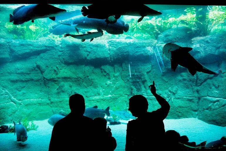 blue-planet-aquarium-Conde-nast-traveller_16apr13_alamy_b