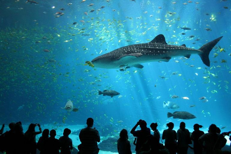georgia-aquarium-woe1