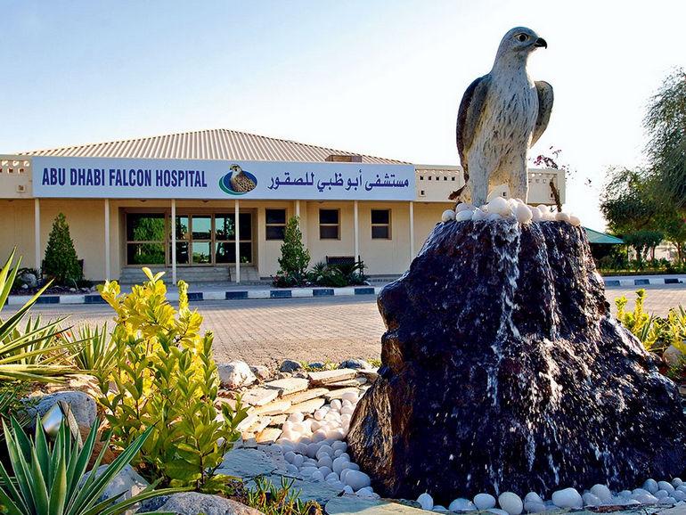 Abu Dhabi Falcon Hospital: уникальная больница для соколов (ОАЭ)