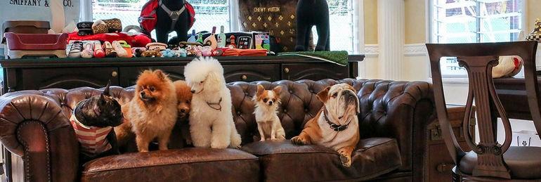 The Wagington: гостиница для животных в Сингапуре