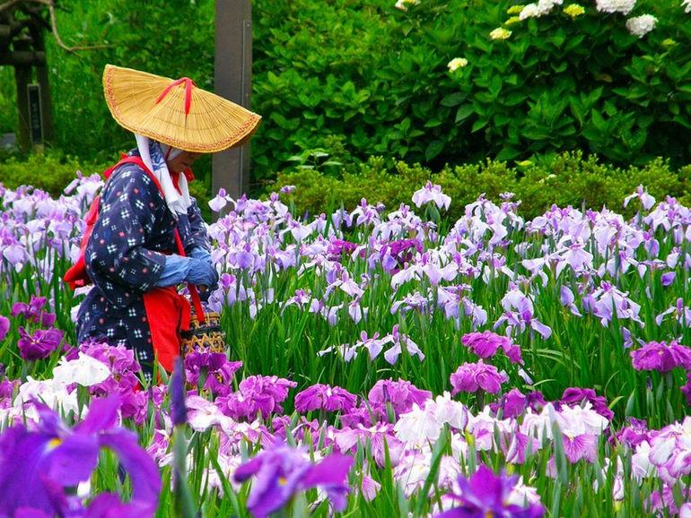 Водный сад ирисов: место, где рассыпались осколки радуги (Япония)