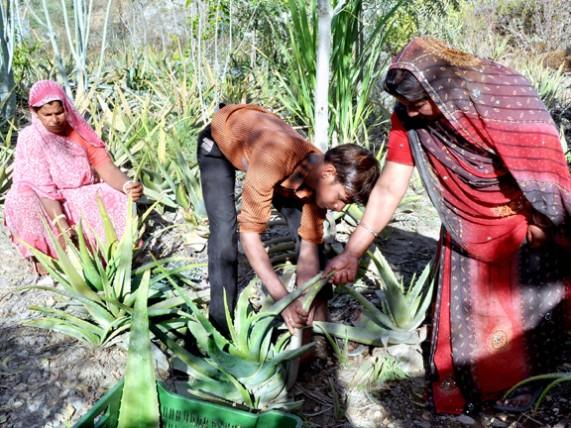 Церемония сажания деревьев при рождении девочки (Индия)