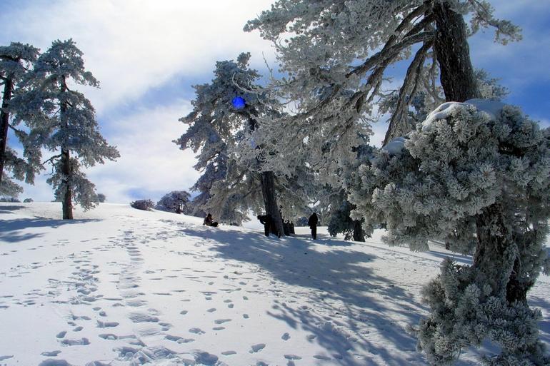 Тродос: горнолыжный курорт Кипра