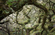 Лес Вистмэна (Великобритания)