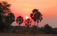 Прокаженное дерево в Малави