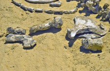 Вади аль Хитан: долина китов в Египте