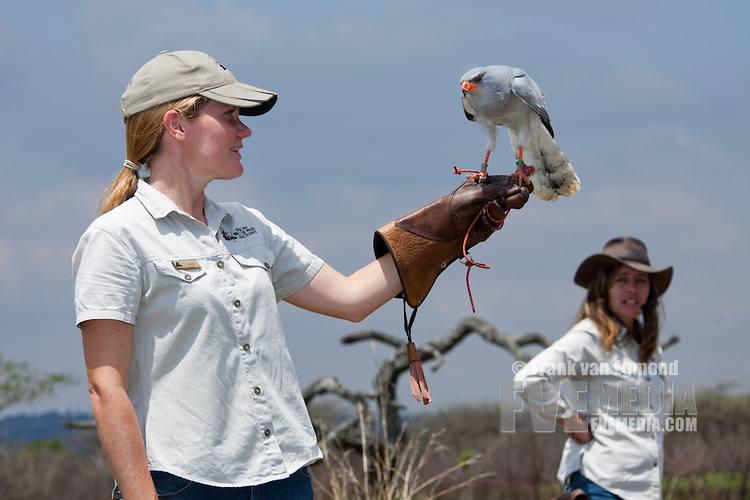 African Bird of Prey Sanctuary: африканский заповедник хищных птиц (ЮАР)