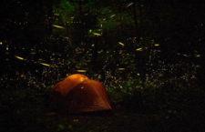 Лес уникальных жуков-светлячков (США)