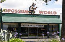 Музей «Мир опоссумов» в Нейпире (Новая Зеландия)