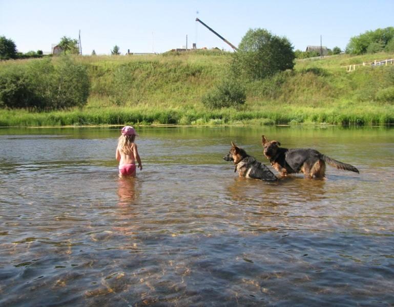 gostinica-dlya-sobak-dogrf.ru-02