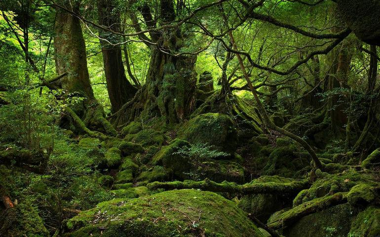 Аокигахару Дзюкай: живое кладбище на подступах к Фудзи (Япония)
