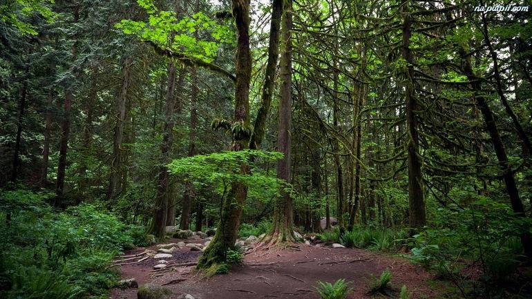 Вольский лес