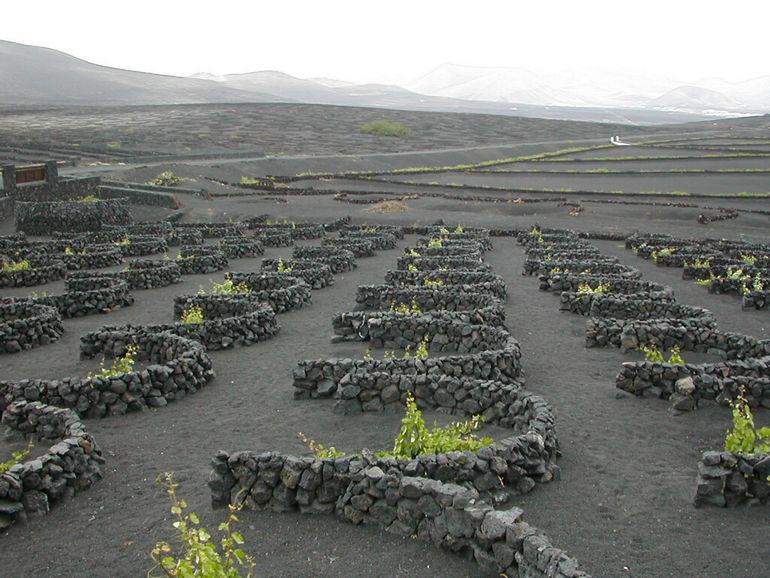 Уникальные виноградники Лансароте