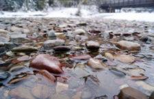 Цветные камни озера Макдональд (США)