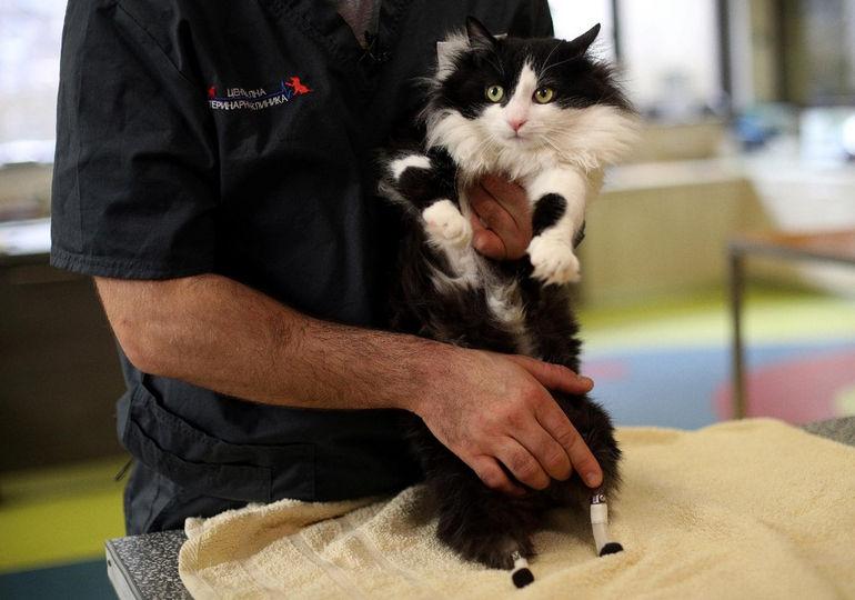 Бионический кот по имени Пух (Болгария)