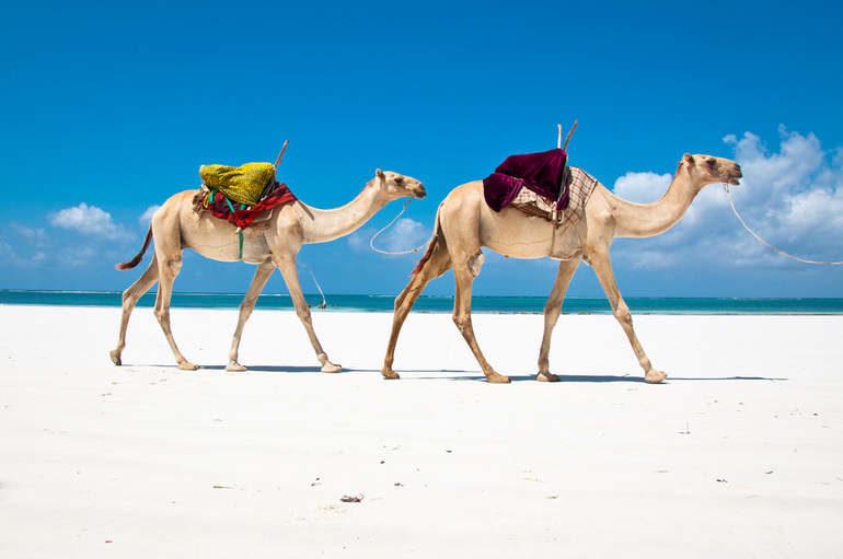 Кенийское побережье: сказочные пляжи