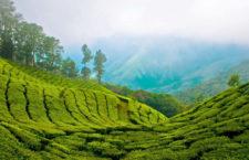 Зелёный рай Муннар