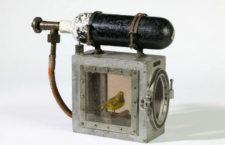 Как в шахтах Британии использовали канареек для выявления опасных газов